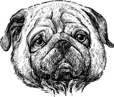 Картина Портрет мопса