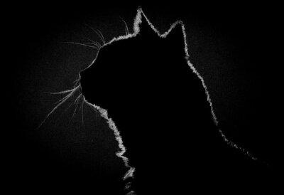 Картина Profile cat in the dark