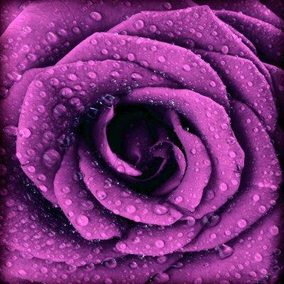 Картина Фиолетовый темно вырос фон