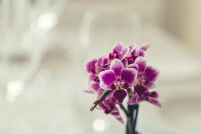 Картина Фиолетовый цветок в цвету на сливочном белом фоне