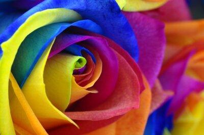 Картина Радуга розы или Счастливый цветок