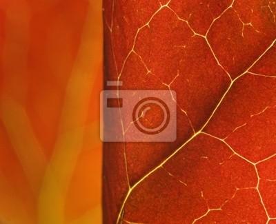 красные листья макрос