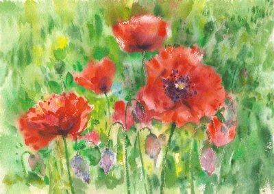 Картина Красные маки цветы фон, акварель.
