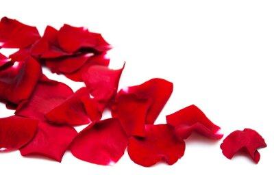 Картина Красные розы лепестки