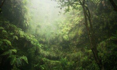 Картина Regenwald tropisch nass abenteuer