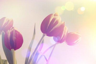 Картина Ретро тюльпаны