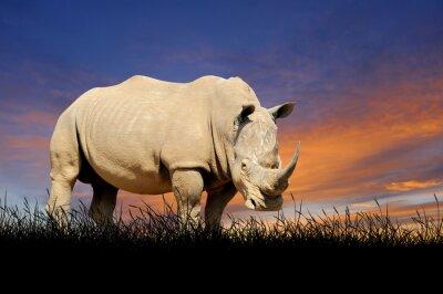 Картина Rhino на фоне закатного неба
