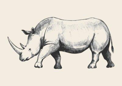 Картина Носорог Эскиз