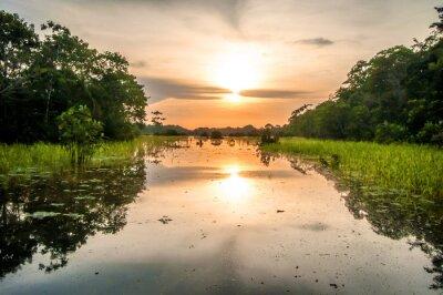 Картина Река в тропических лесов Амазонки в сумерках, Перу, Южной Америки
