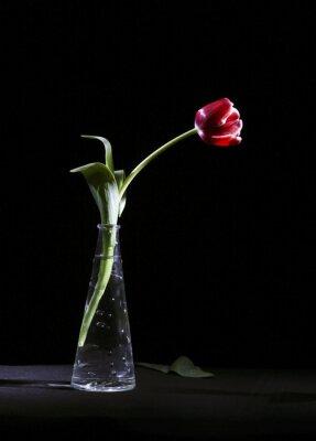 Картина Samotny Tulipan