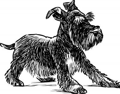 Картина шнауцер щенка