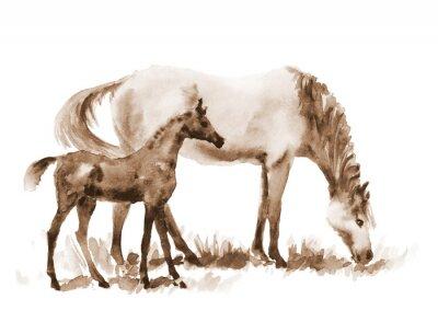 Картина Sepia акварель кобыла и жеребенок на белом фоне. Красивые руки окрашены иллюстрации двух лошадей на поле.