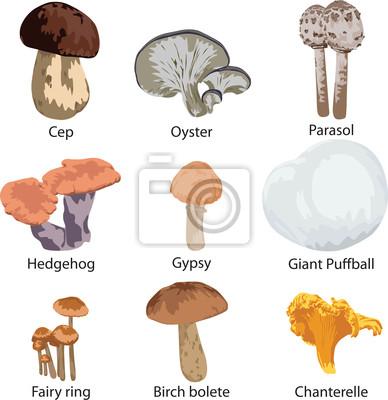набор съедобных грибов