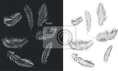 Набор векторных перьев