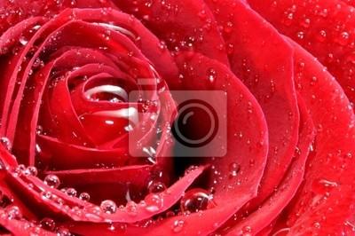 Lluvias SOBRE ип Capullo De Rosa.