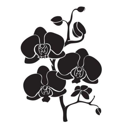 Картина Силуэт орхидеи филиал