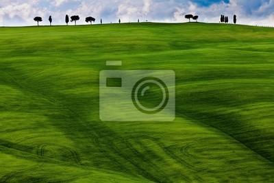 Картина Sagome