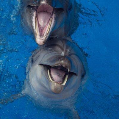 Картина Улыбаясь дельфин