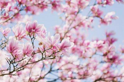 Картина Весна! Цветущая магнолия
