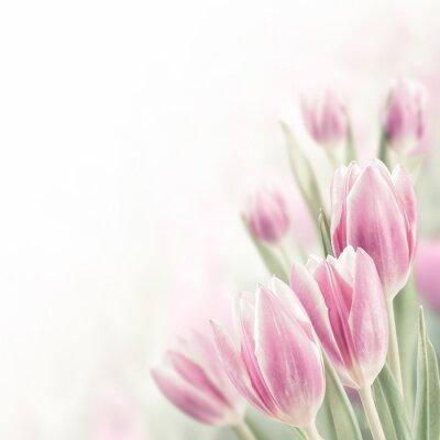 Картина Spring Background with Tulip