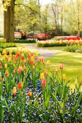 Картина весенний сад