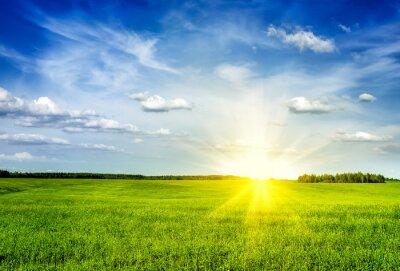 Картина Весна лето зеленое поле декорации Lanscape