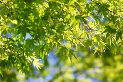 Картина весной дерево