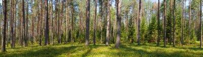 Картина панорама хвойное лес лето
