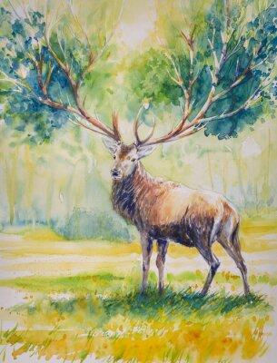 Картина Summer.Red олень с большими рогами на которых растут leaves.Picture, созданный с акварелью.