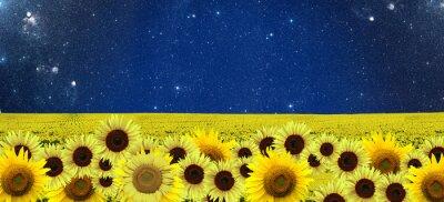 Картина Подсолнухи поле