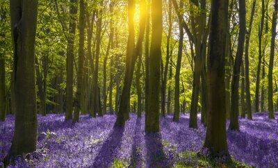 Картина Солнечный свет бросает тени на колокольчиков в лесу