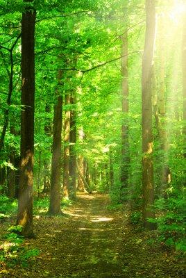 Картина солнечный лес