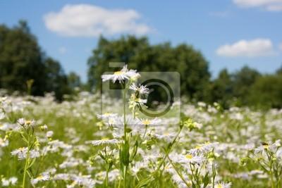 солнечный луг цветущий на фоне голубого неба