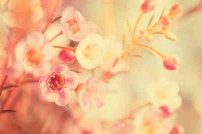 Картина Сладкий тон и мягкий фокус цветок