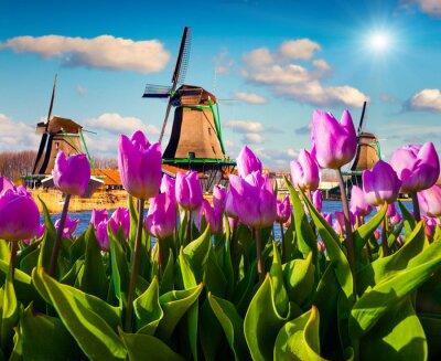 Картина Знаменитые голландские ветряные мельницы