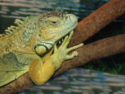 Картина Глава зеленая ящерица на дереве