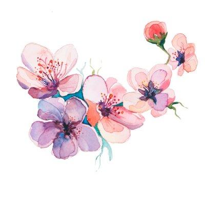 Картина весенние цветы акварели, изолированных на белом фоне
