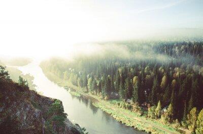 Картина толстый утренний туман в хвойном лесу. хвойные деревья, заросли зеленого леса.