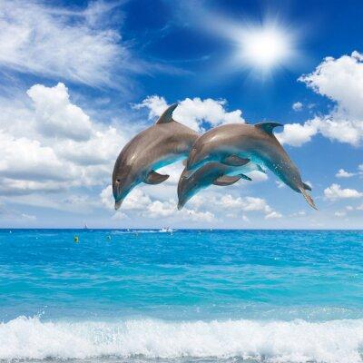 Картина три дельфинов, прыжки