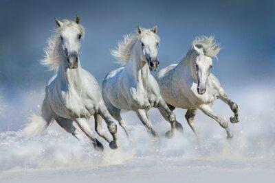 Картина Три белых коня бежать галопом в снегу