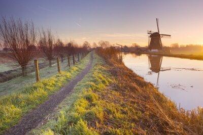 Картина Традиционный голландский ветряная мельница в Нидерландах на рассвете