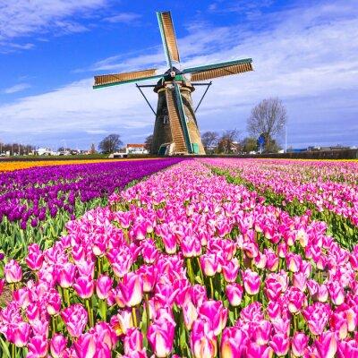 Картина традиционные Голландии сельской местности - ветряные мельницы и тюльпаны