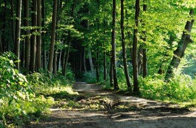 Картина Тропа в лесу
