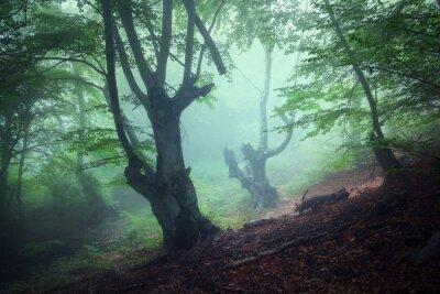 Картина Тропа через таинственный темный старый лес в тумане. осень
