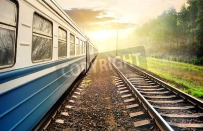 Картина Поезд движется по сосновому лесу на закате