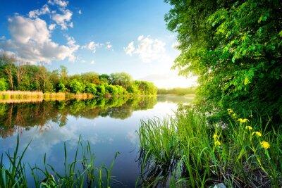 Картина Деревья по спокойной реке