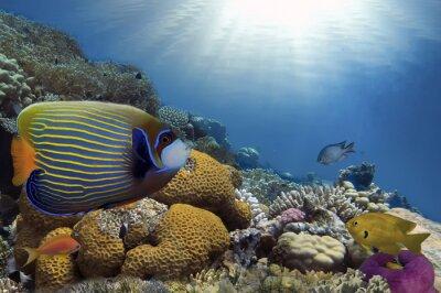 Картина Тропические рыбы на коралловых рифов