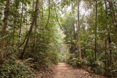 Картина Тропический лес