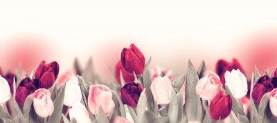 Картина Tulip colorful flower panoramic border on white