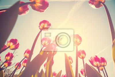 Картина тюльпан цветы